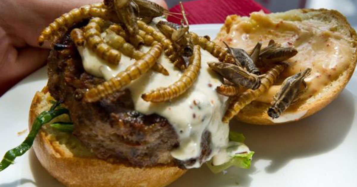 Insect Snacks from Around the World
