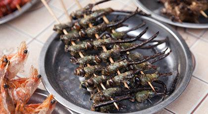 Should We Eat Bugs?