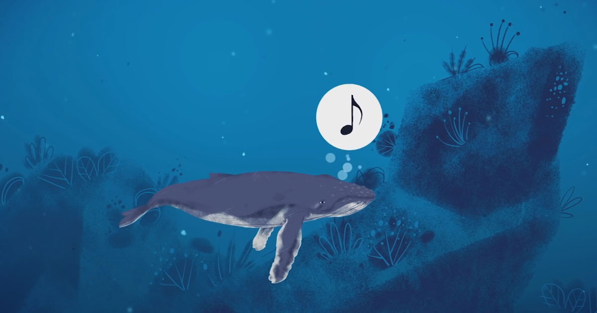 The Singing Whales