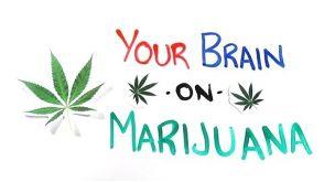 Your Brain on Drugs: Marijuana